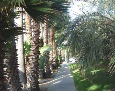 Palm trees walkway